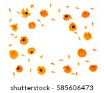 Stock photo flowers and petal calendula calendula officinalis pot marigold ruddles garden marigold english 585606473