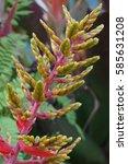 Small photo of Yellow and green Aechmea Bromeliad plant
