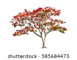 Flam Boyant  The Flame Tree ...