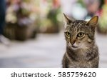 Stock photo cat 585759620