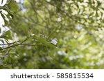Close Up Of Green Oak Leaves I...