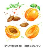 watercolor illustration of... | Shutterstock . vector #585880790