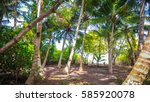 palm leaves.tropical forest on... | Shutterstock . vector #585920078