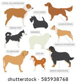 working  watching  dog breeds... | Shutterstock .eps vector #585938768