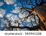 baobab  madagascar | Shutterstock . vector #585941108