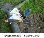 gardening  | Shutterstock . vector #585950249