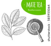 Mate Tea Top View Vector...