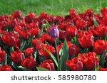 tulips | Shutterstock . vector #585980780