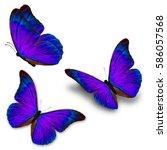 beautiful three blue butterfly...   Shutterstock . vector #586057568