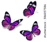 Stock photo three monarch butterfly isolated on white background 586057586