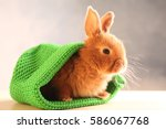 Stock photo cute funny rabbit in green hat on wooden table 586067768