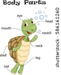 turtle body parts. animal...   Shutterstock .eps vector #586161260