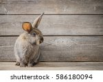 funny rabbit on wooden... | Shutterstock . vector #586180094