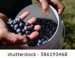 hand holding bunch of... | Shutterstock . vector #586193468