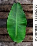 Green Shoots Of Banana Leaf On...