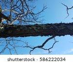 Lichen On Tree Branch With Blu...