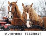 Draught Horses Pair