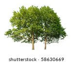 two oak trees isolated on white ... | Shutterstock . vector #58630669