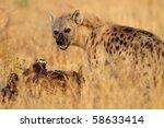 Spotted hyena by carcass in soft morning light, Serengeti, Tanzania - stock photo