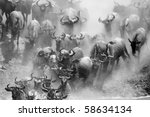 Wildebeest crossing the Mara River during the migration, Serengeti, Tanzania - stock photo