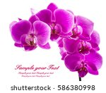 orchid isolated on white... | Shutterstock . vector #586380998