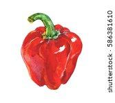 hand drawn red pepper.... | Shutterstock . vector #586381610
