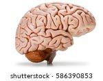 plastic model of human brain ... | Shutterstock . vector #586390853