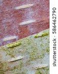 Close Up Macro Texture Of...
