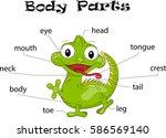iguana body parts. animal...   Shutterstock .eps vector #586569140