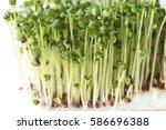 broccoli sprouts | Shutterstock . vector #586696388