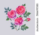 watercolor hand painted roses.... | Shutterstock . vector #586699580