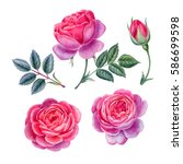 watercolor hand painted roses.... | Shutterstock . vector #586699598