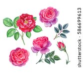 watercolor hand painted roses.... | Shutterstock . vector #586699613