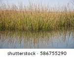 Swamp Grass Reflected In Water...