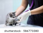 female veterinary doctor using...