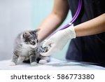 female veterinary doctor using...