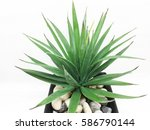 agave isolated on white... | Shutterstock . vector #586790144