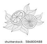 vector monochrome contour... | Shutterstock .eps vector #586800488