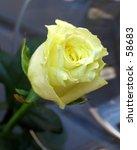 rose | Shutterstock . vector #58683