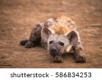 baby hyena kruger national park | Shutterstock . vector #586834253