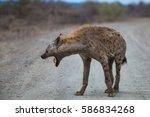 hyena  kruger national park | Shutterstock . vector #586834268