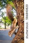 close up  squirrel tears... | Shutterstock . vector #586840820