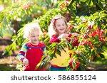 kids picking cherry on a fruit... | Shutterstock . vector #586855124