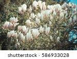 vintage photo  blooming... | Shutterstock . vector #586933028