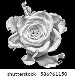 monochrome macro portrait of an ... | Shutterstock . vector #586961150
