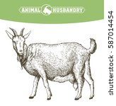 sketch of goat drawn by hand.... | Shutterstock .eps vector #587014454