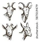 goat head. livestock. animal... | Shutterstock . vector #587019479