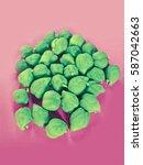 grams  cicer arietinum | Shutterstock . vector #587042663