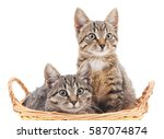 Kittens In A Basket Isolated O...