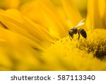 Macro View Of Honeybee...